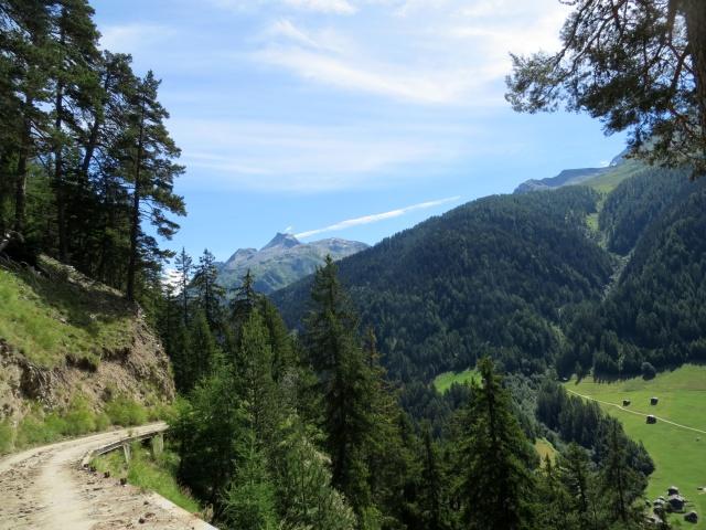 Salita in forestale all'alpe Äbnimatt