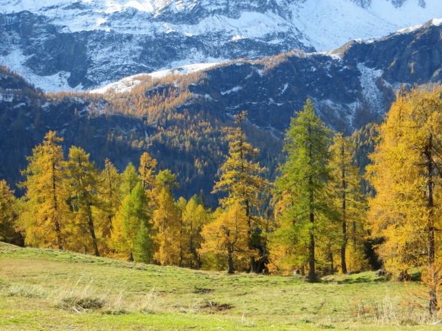 Alpe Piota, colori autunnali