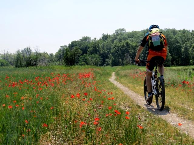 Anello Parco del Serio - percorrendo uno dei tanti sentieri del Parco durante la fioritura dei papaveri