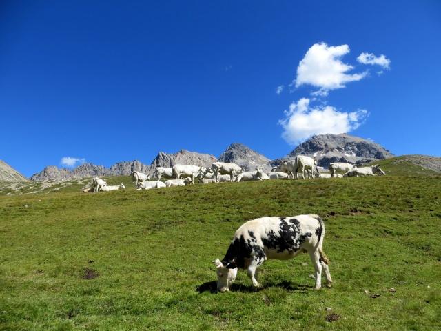 Colle di Valle Stretta - particolare