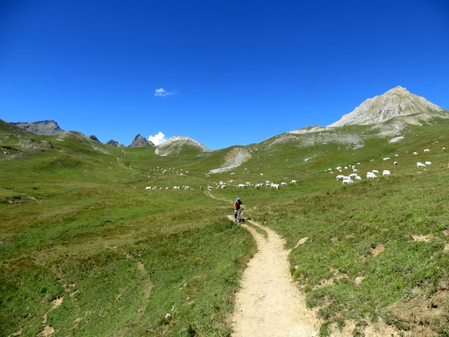 Discesa su sentiero nei pascoli sottostanti il Colle di Valle Stretta - Plain de Tavernette