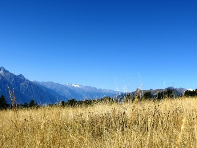 Nei pressi dell'Alpe Chanchellier Superiore - particolare