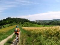 Vigneti, spighe e casali nel Monferrato Casalese