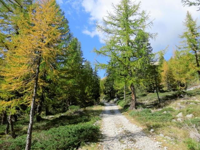 Percorrendo lo sterrato che sale all'Alpe Monscera
