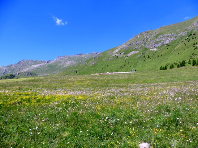 Fioritura presso l'Alpe di Metsan