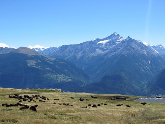Alpe Grand Arpilles - panorama sulla Grivola