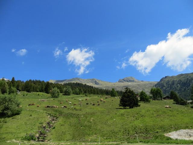 Alpeggi nei pressi di Carì