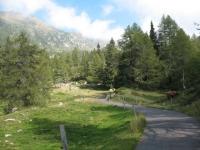 Discesa verso l'Alpe Gesero