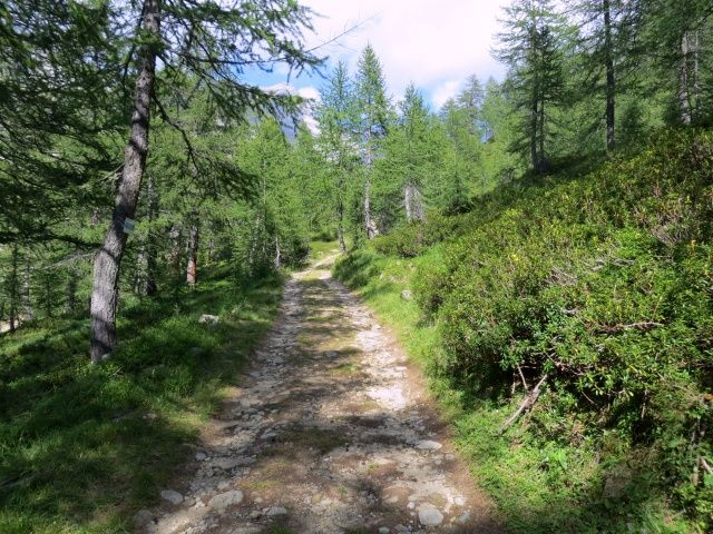 Salita su forestale da La Balma a Pian du Scricc