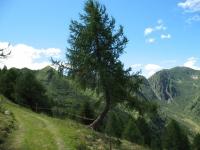 Salita su forestale dall'Alpe Giumello al Piano delle Pecore