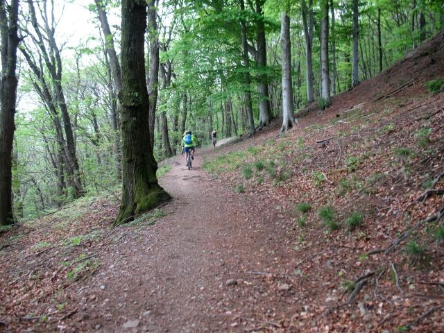 Tratto nel bosco verso Cademario