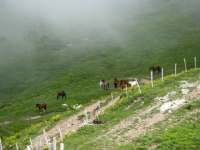 Monte Chiappo - particolare
