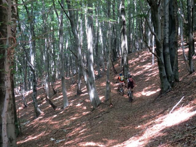 Lungo il sentiero della Granfondo del Mottarone, passaggio nella faggeta