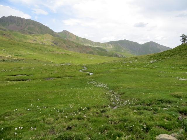I pascoli attorno all'alpe Tsa de la Comba, sullo sfondo la Punta Chaligne e la Punta de Metz