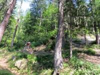 Discesa da Cheneil, ultimo tratto nel bosco prima di Valtournenche