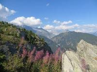Panorama sull'Aletsch da Nessel