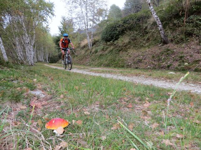La forestale dell'Alpe Pianale