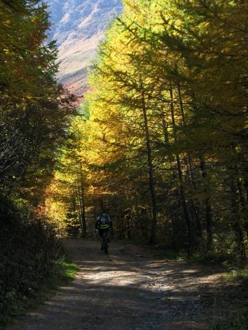 Sterrato in direzione Col de Sollieres - particolare