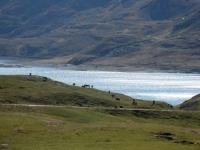Pascoli ai margini del Lago