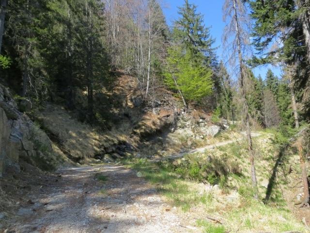 La sterrata che scende dall'Alpe Fontana Verde