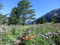 In direzione di La Draye, trail