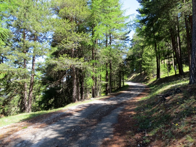 Tratto iniziale della forestale che sale da Riedji a Gspon