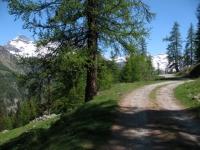 Salita all'Alpe di Nana inferiore
