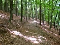 Passaggio nei boschi sotto l'Alpe di Agra