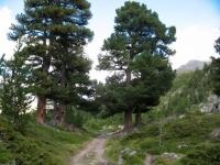 Ottimo sentiero da Riffelalp a Ze Gassen