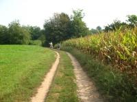 Nelle campagne di Albiolo