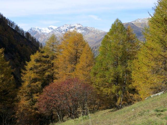 Colori autunnali in Val di carassino, sullo sfondo lo Scopi imbiancato e la Cima della Bianca