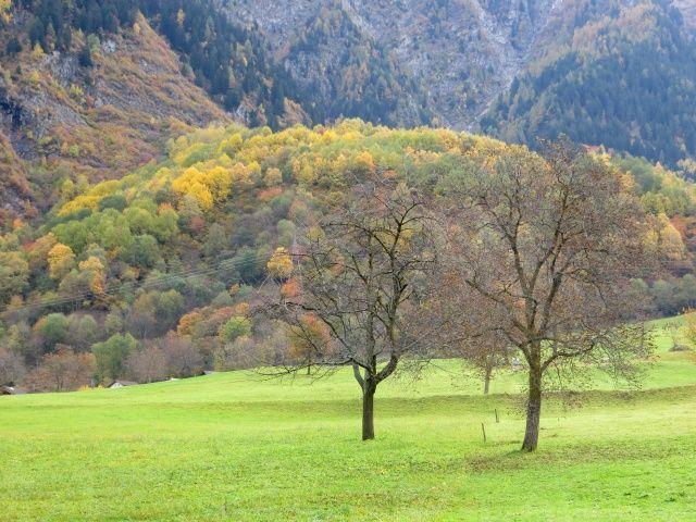 Val di Blenio, nelle vicinanze di Olivone. Colori autunnali.