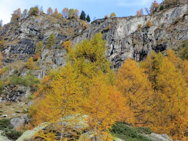 Colori autunnali in Val di Carassino