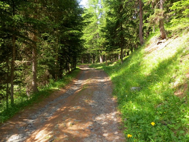 La forestale che sale nel bosco a partire dal camping Rutor