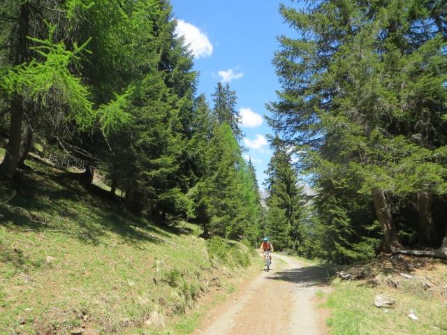 La forestale che sale a Pian Mott
