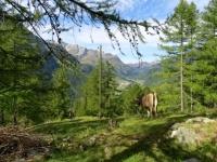 Discesa dal Furggupass, sentiero per Gabi, sullo sfondo Simplon Dorf