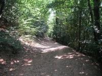 Tratto nel bosco dopo il termine dell'asfalto