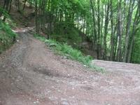 Ripida forestale che risale le pendici del Sasso Gordona