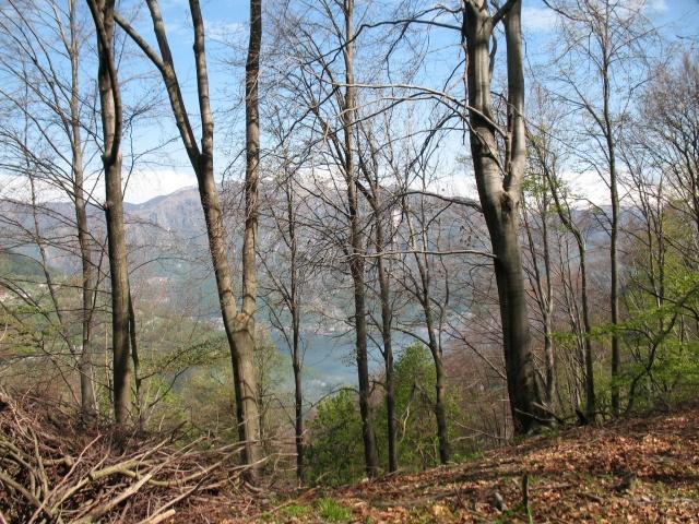 In direzione dell'Alpe di Colonno - particolare