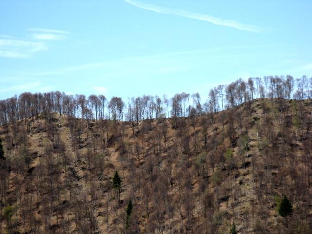 Discesa al rifugio Boffalora - panorama