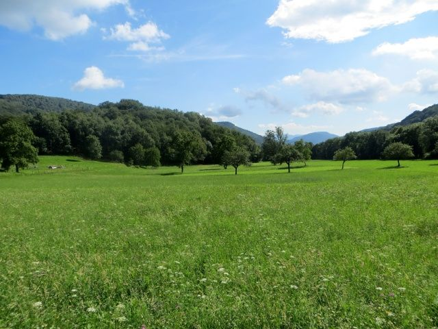 Verde pianoro sotto l'Alpe di Arosio
