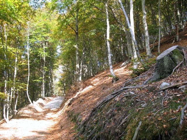 Forestale in direzione Madonna della Guardie