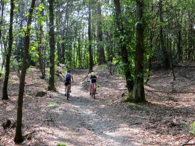 Forestale dopo il Villaggio Olandese