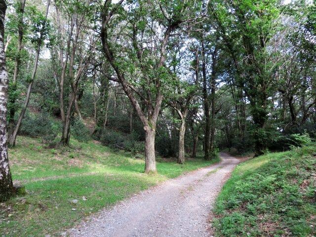 Nei boschi vicino a Monte Ceneri