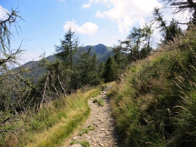 Single-track in discesa verso l'Alpe Canigiolo