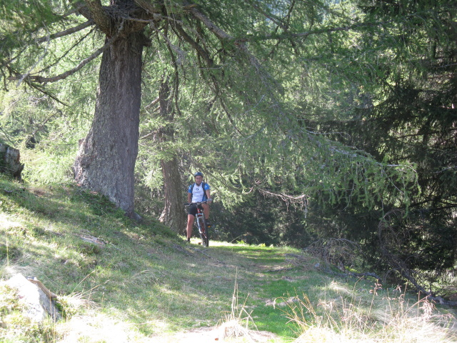 Discesa verso Puscett - bosco