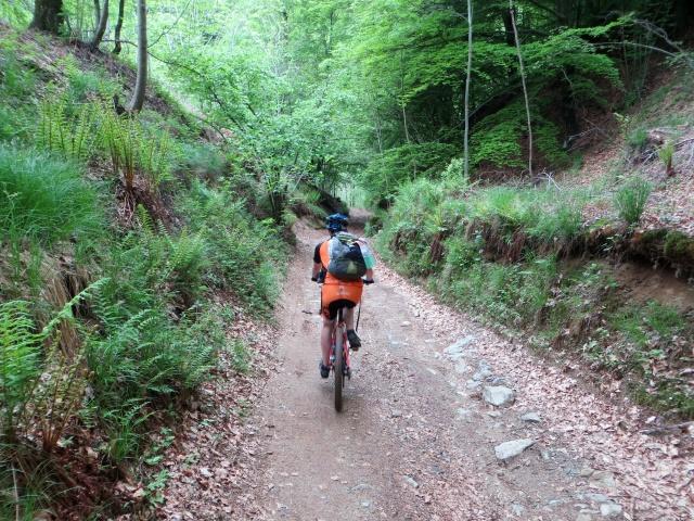Lungo la forestale che scende dall'Alpe Sacchi in direzione dei Laghi di Nonio