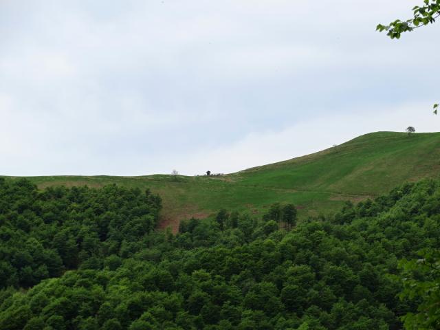 Il Colle del Ranghetto visto dalla forestale che sale dalla Bocchetta di Foglia