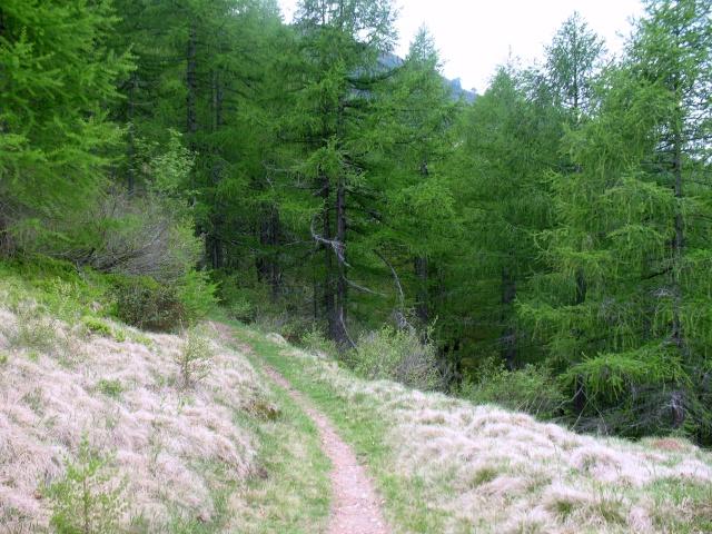 Single-track verso l'Alpe di Matro