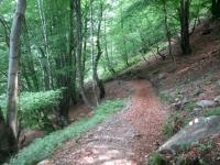 Single-track in direzione dell'Alpe Murecc - passaggio nel bosco